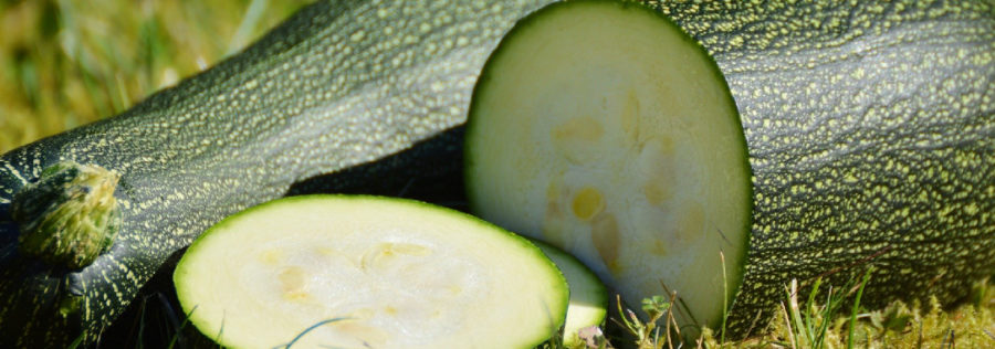 Potager Courgette